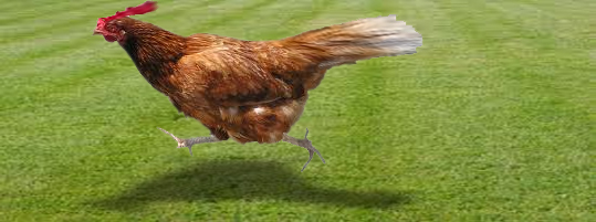 Running Chicken_edited-1