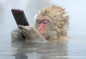 snow+monkey+iphone